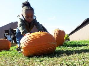 fall-326731_1280